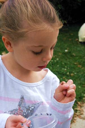 Girl looking at ladybug crawling on her hand